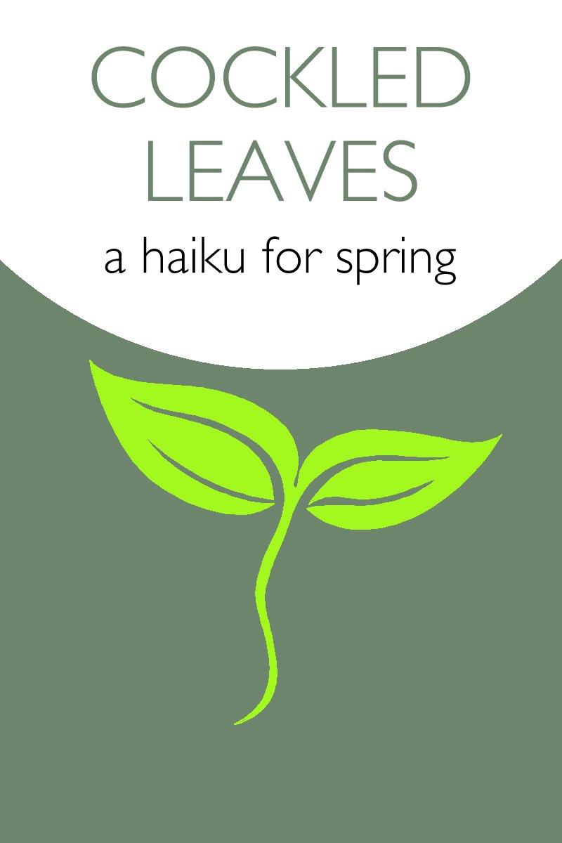 a haiku for spring